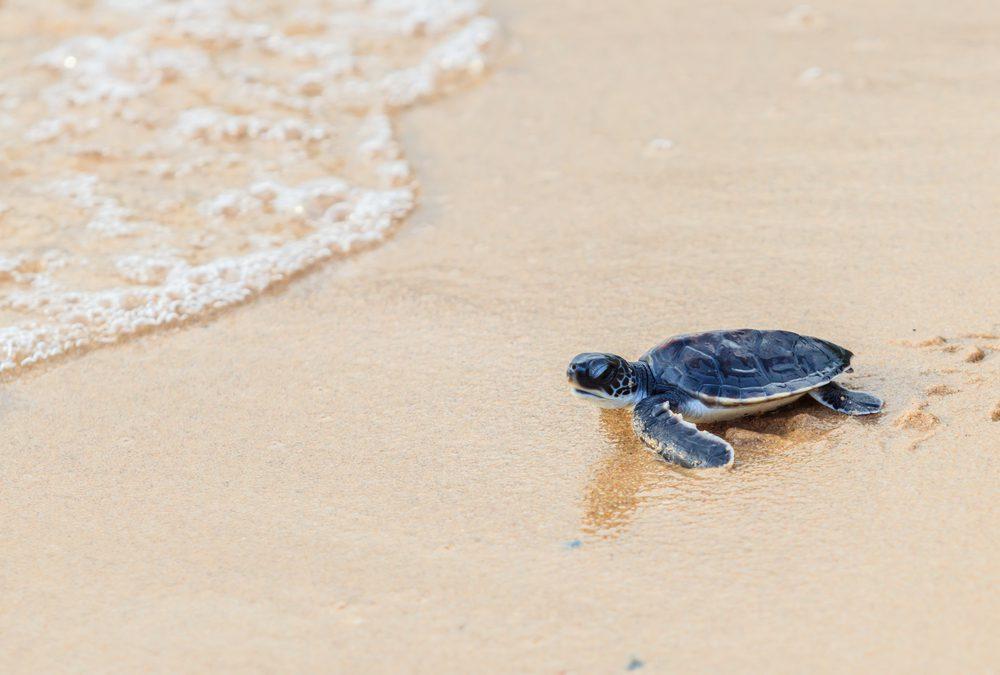 """""""De landschildpad en de zeeschildpad"""""""
